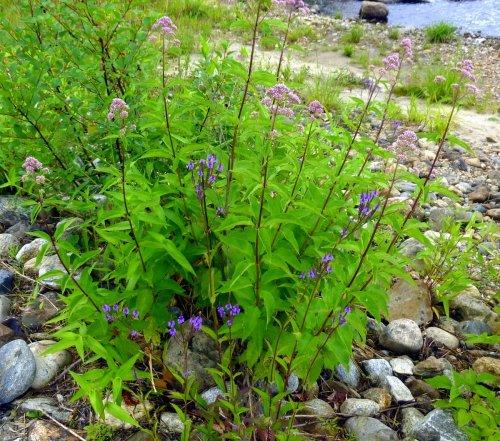 11. Riverbank Flowers