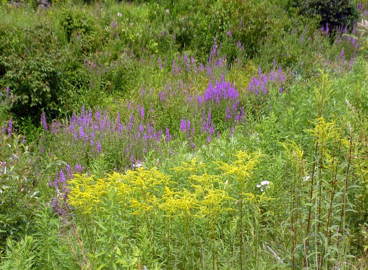 15. Meadow Flowers