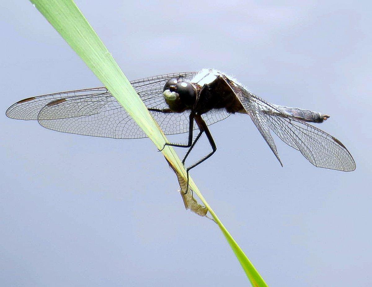 2. Dragonfly