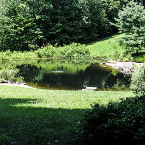 2. Pond