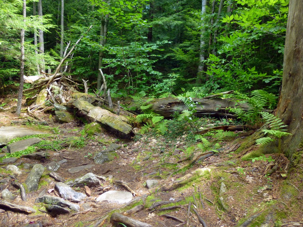 4. Forest Clearing