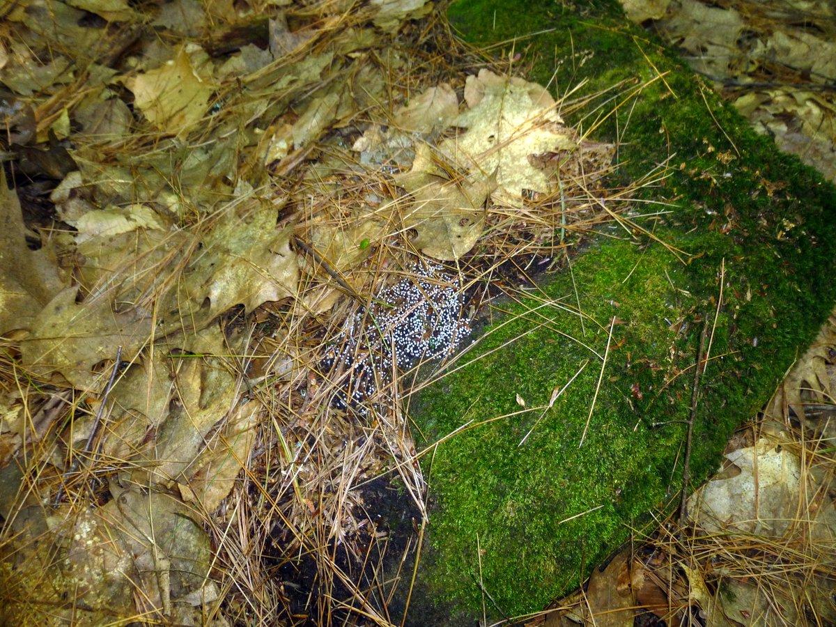 6. White Slime on Rock