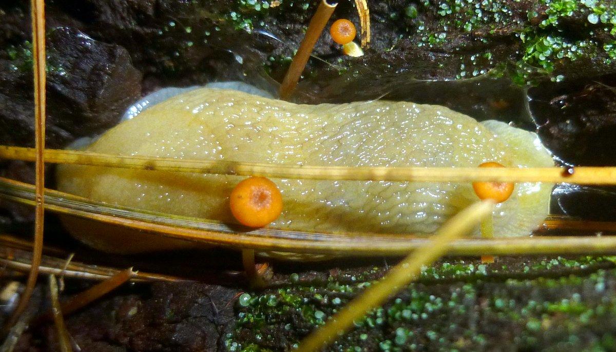 13. Slug