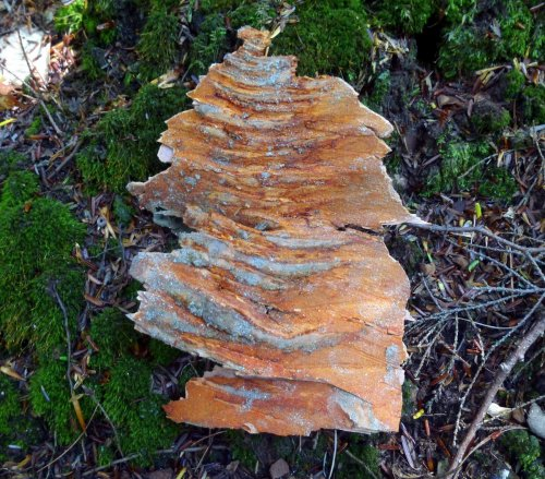 17. Tree Bark