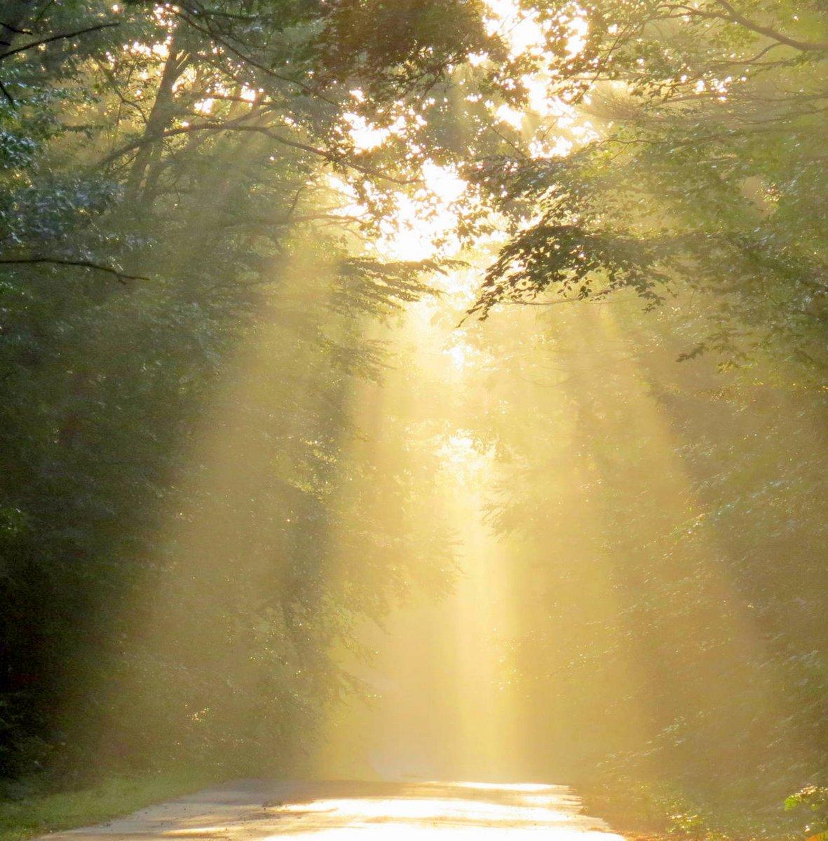 2. Sun Through the Trees