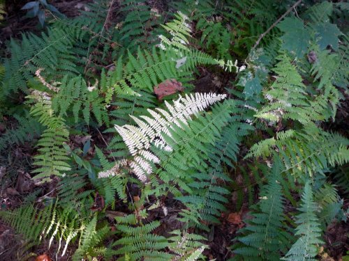 3. Ferns Turning