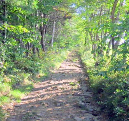 6. Trail