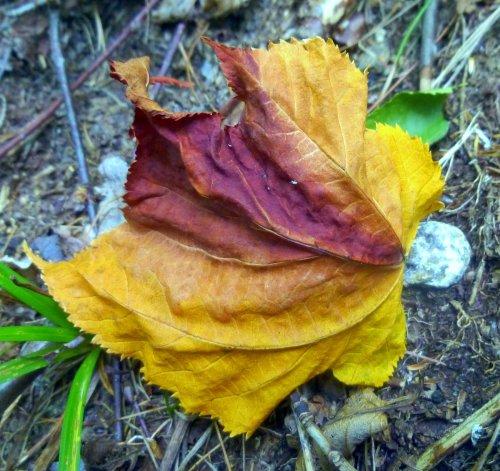7. Leaf