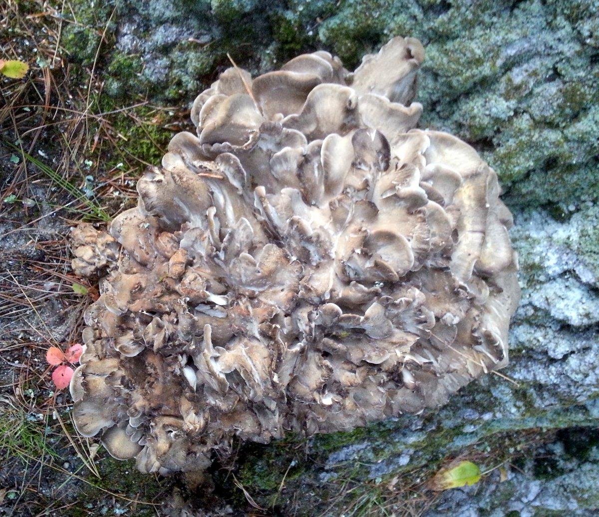 10. Fungus