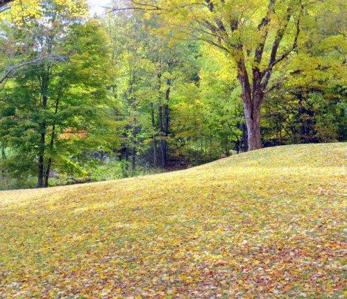 16. Fallen Leaves