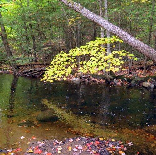 17. Beaver Brook