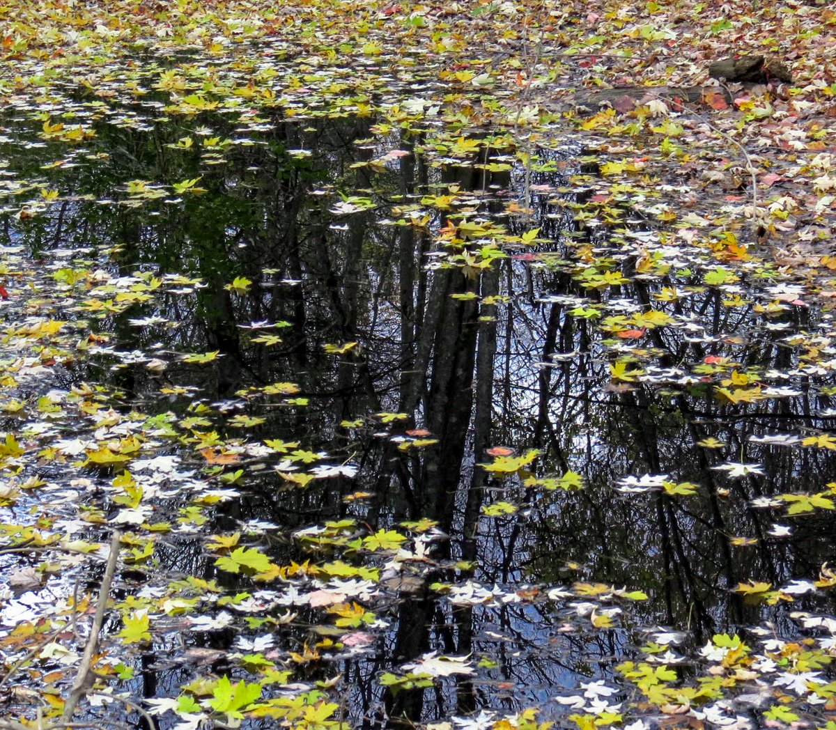 18. Leaves on Water
