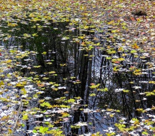 18. Leaves on Water