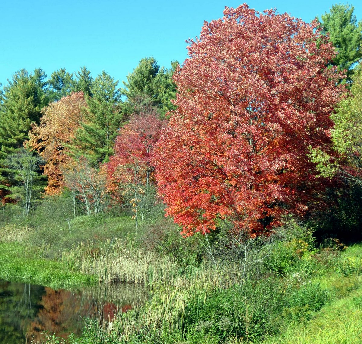 Autumn in New Hampshire | New Hampshire Garden Solutions