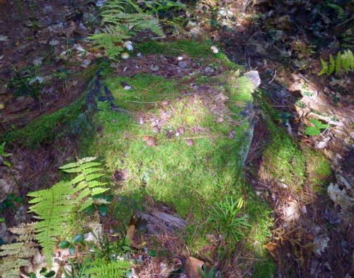 5. Mossy Stump