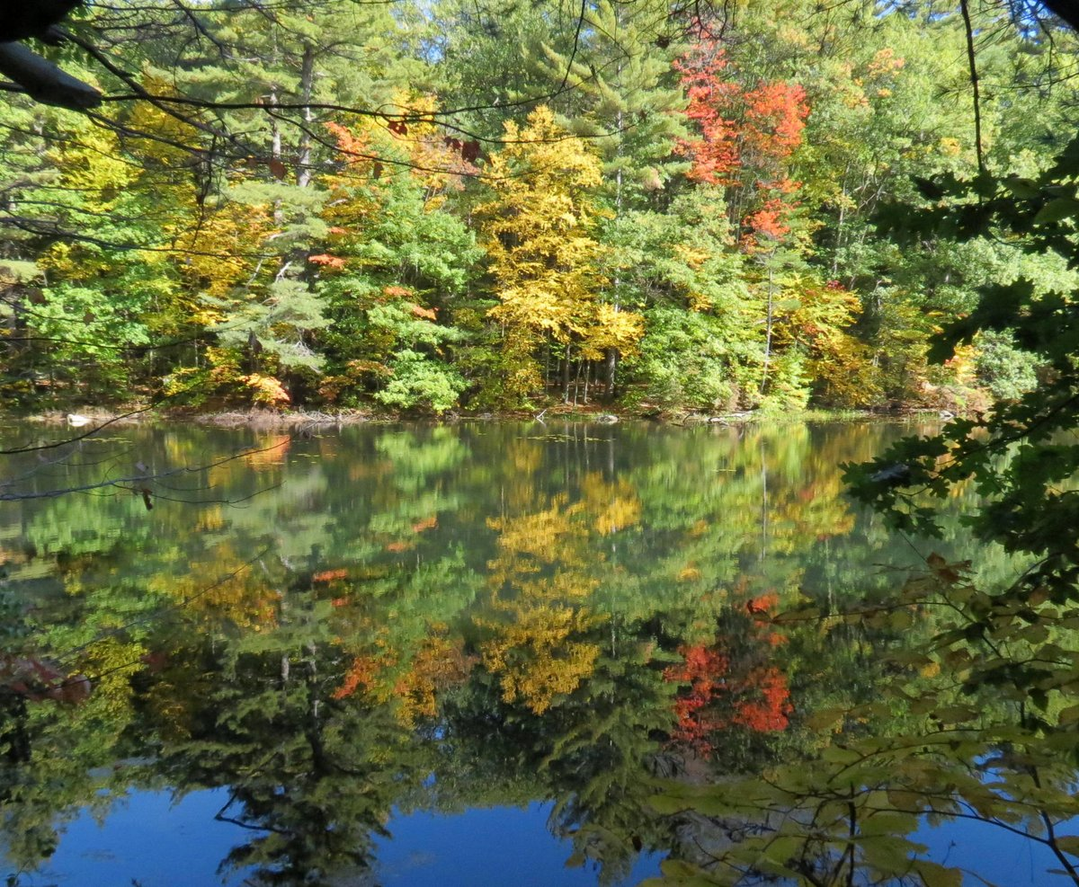 Beech Trees in the Fall | New Hampshire Garden Solutions