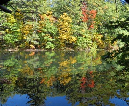 6. Pond View