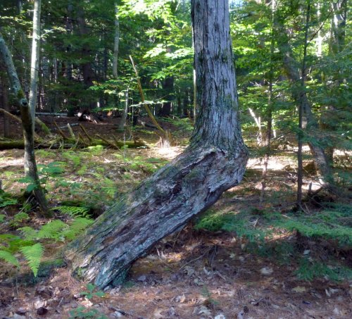9. Bent Tree