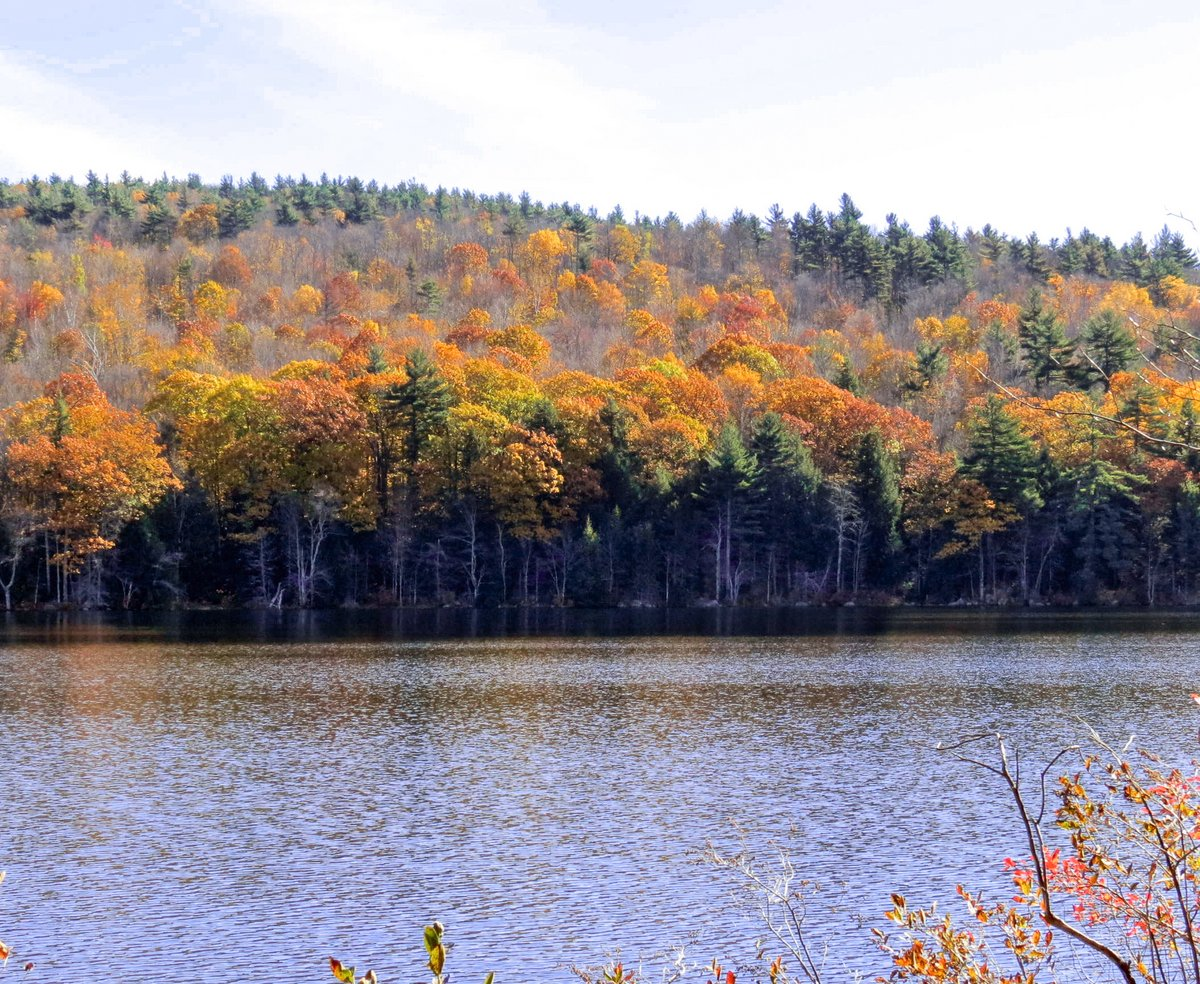 11. Foliage