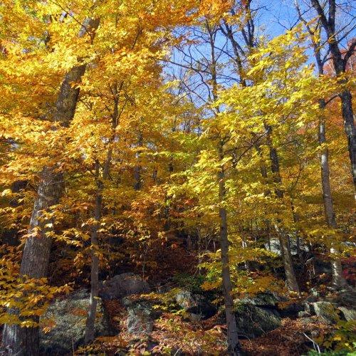 12. Hardwood Forest