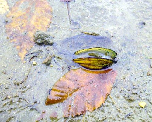 14. Pond Mud