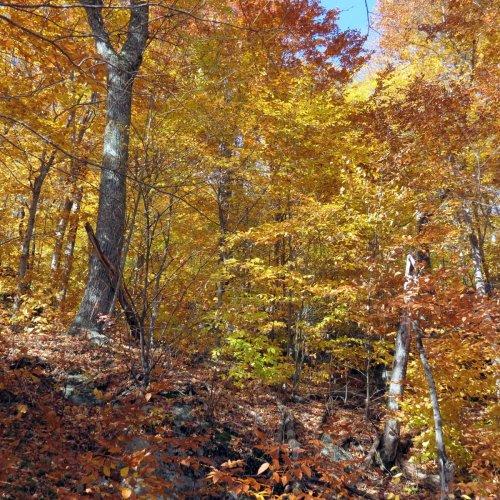 18. Hardwood Forest