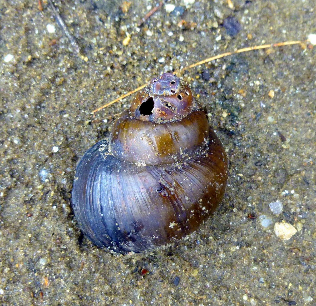 4. Snail Shell