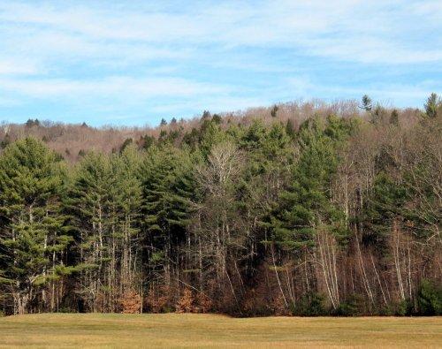 7. Woods