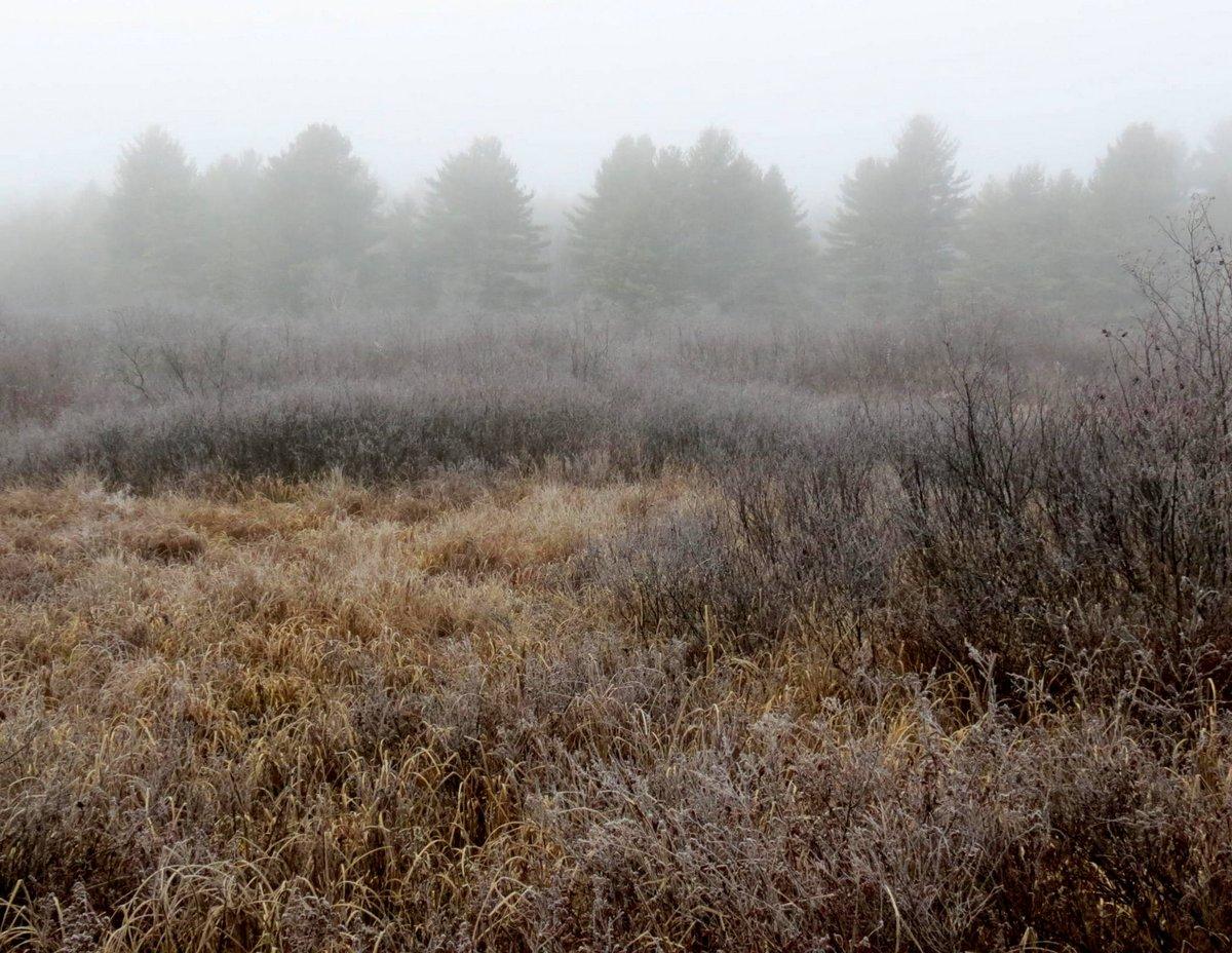 1. Freezing Fog Morning