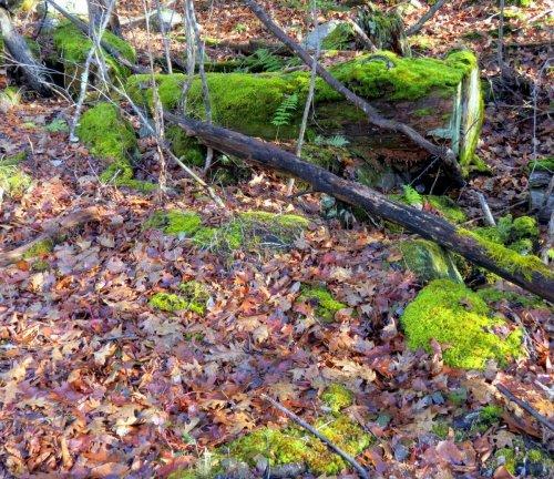 1. Mosses