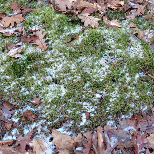 11. Moss