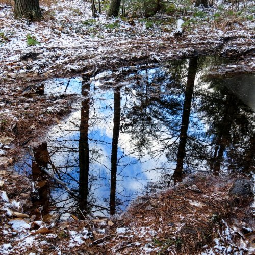 13. Puddle Reflections