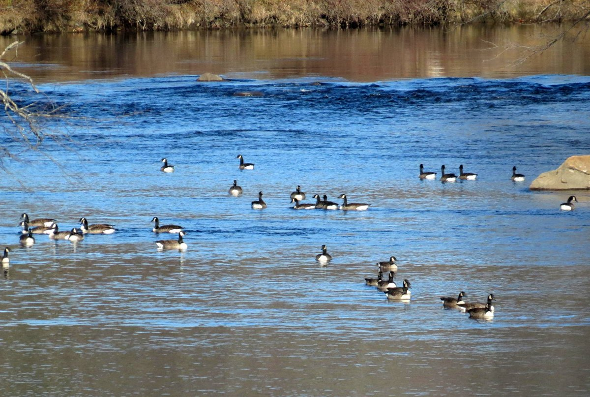 15. Geese on the River
