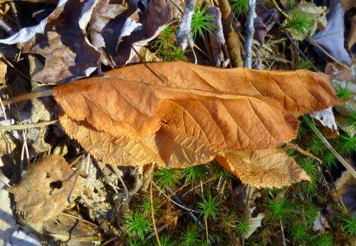 2. Leaf