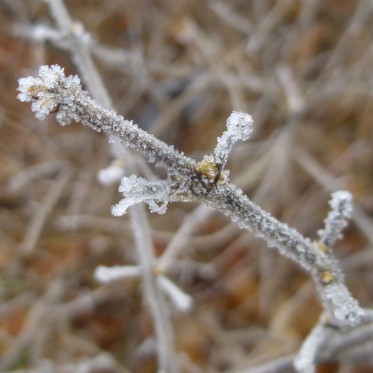 3. Frosted Twigs