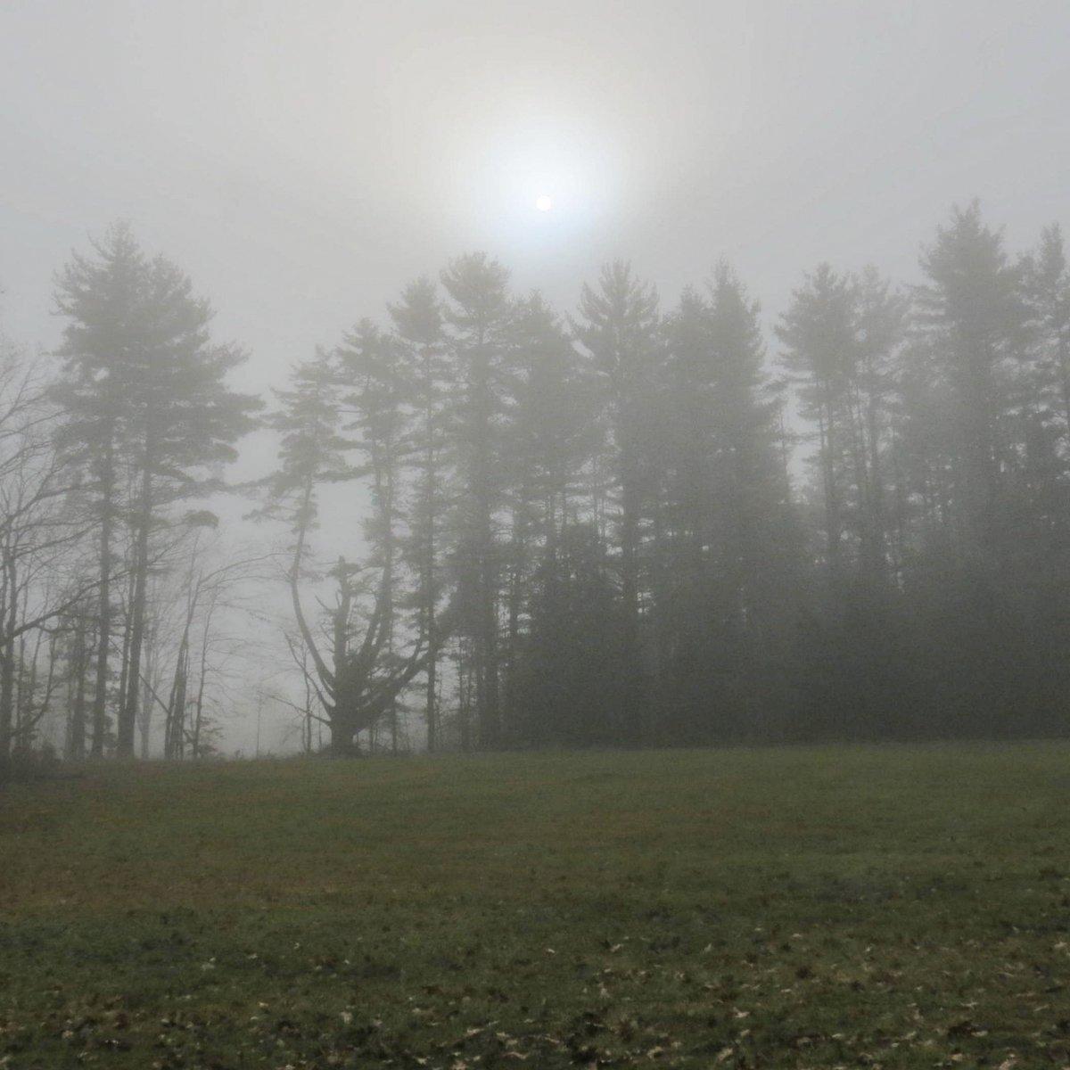4. Foggy View
