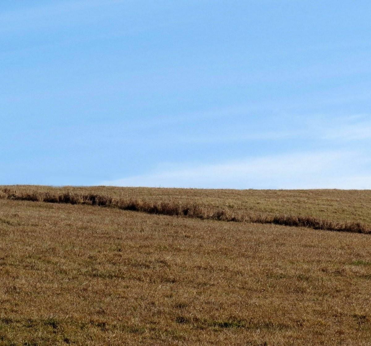 5. Pasture
