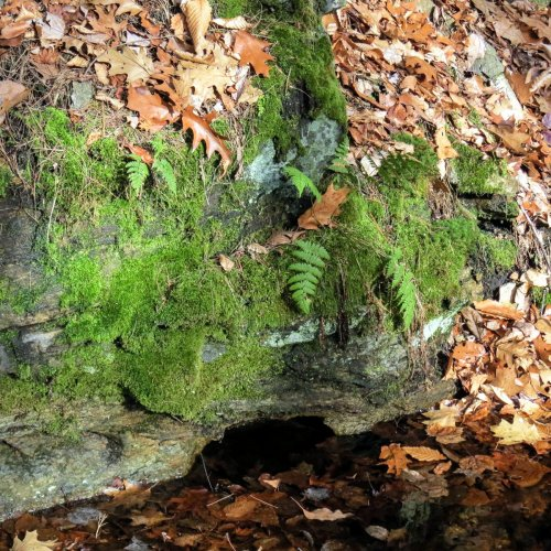 6. Mossy Wall