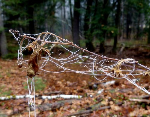 7. Spider Web