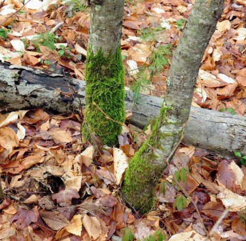 8. Tree Skirt Moss