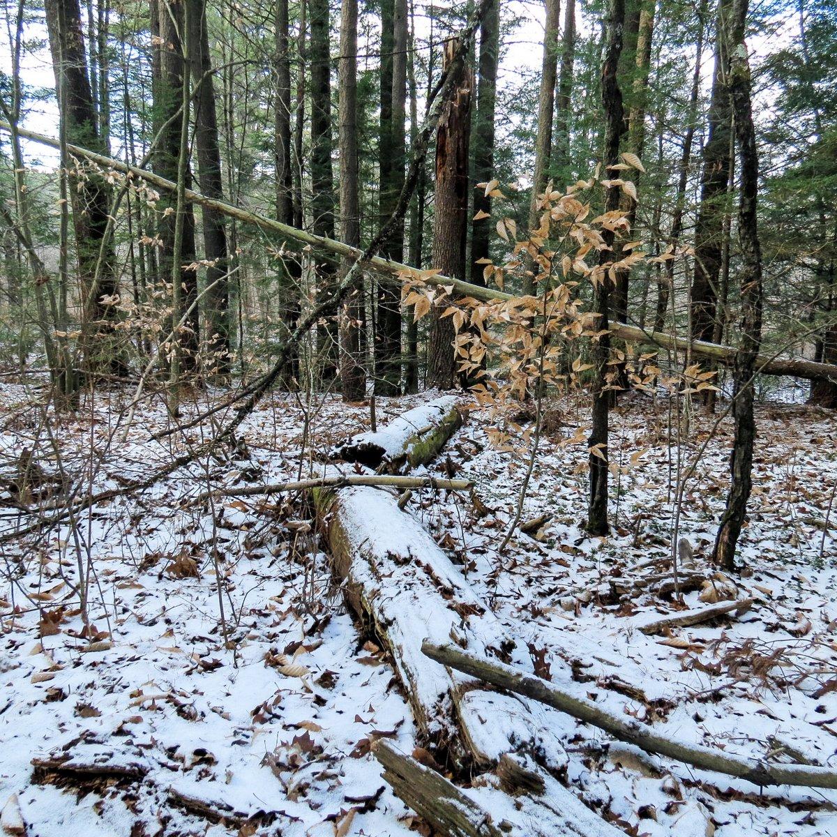 8. Woods