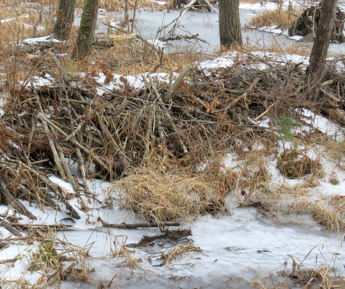 1. Beaver Dam