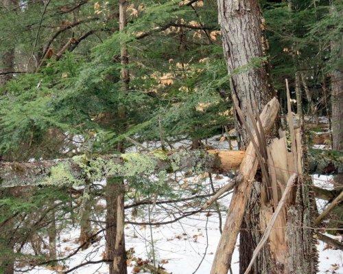 10. Fallen Tree