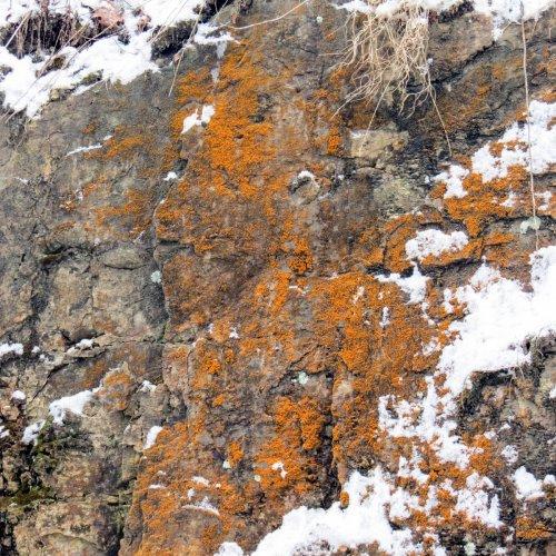 10. Orange Algae