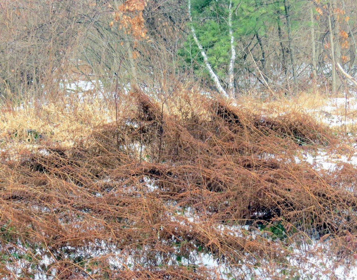 11. Dead Ferns