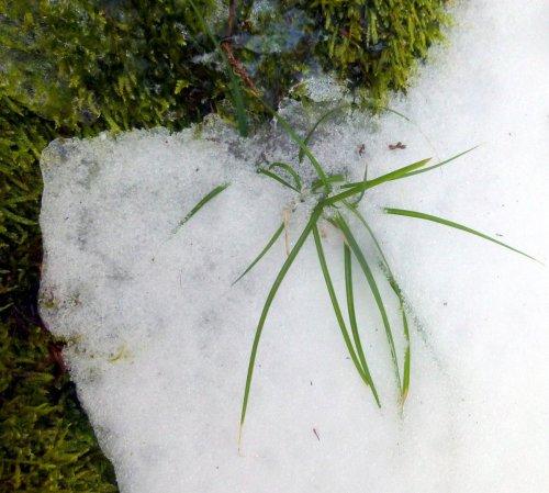 14. Grass