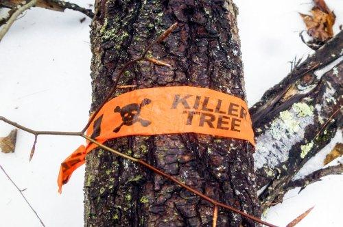 16. Fallen Killer Tree