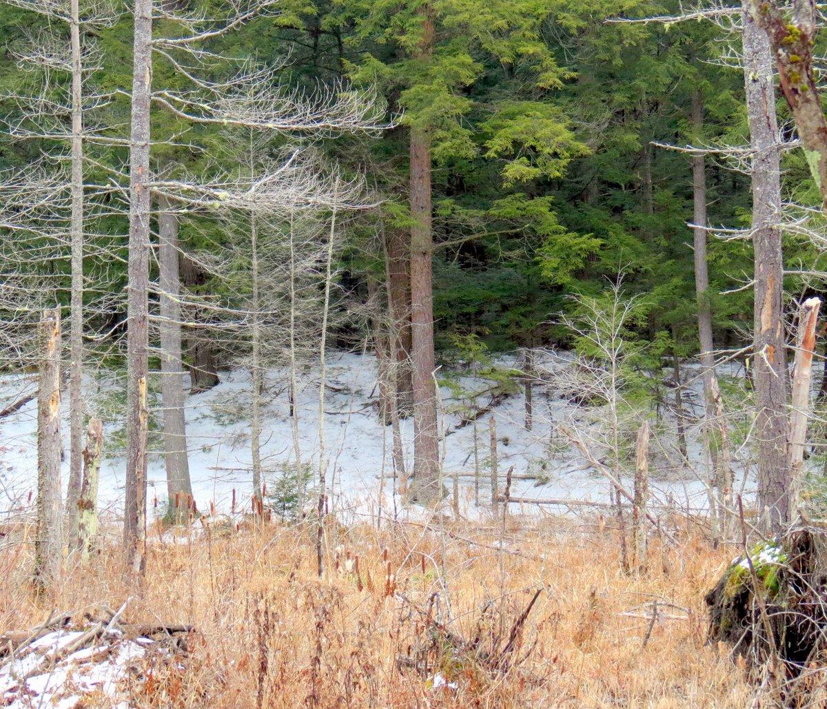 2. Beaver Swamp