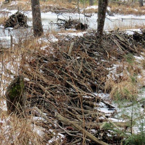 3. Beaver Dam