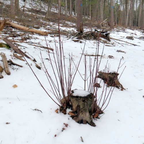3. Hardwood Stump